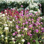 les fleurs du moulin