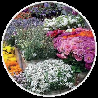Fleurs paris